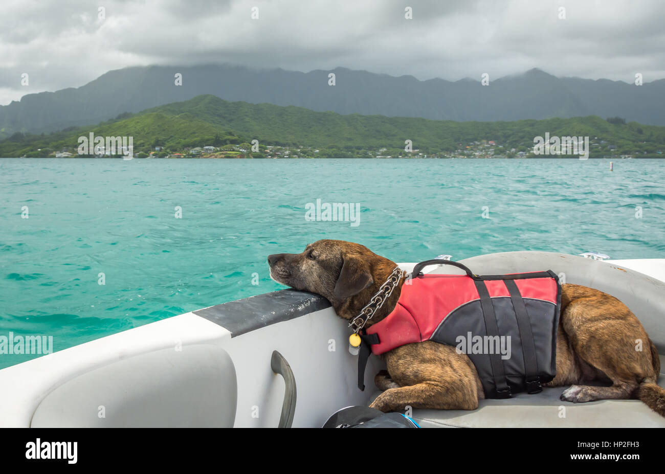 A lazy dog on a boat, wearing a life jacket and cruising along the emerald green ocean. - Stock Image