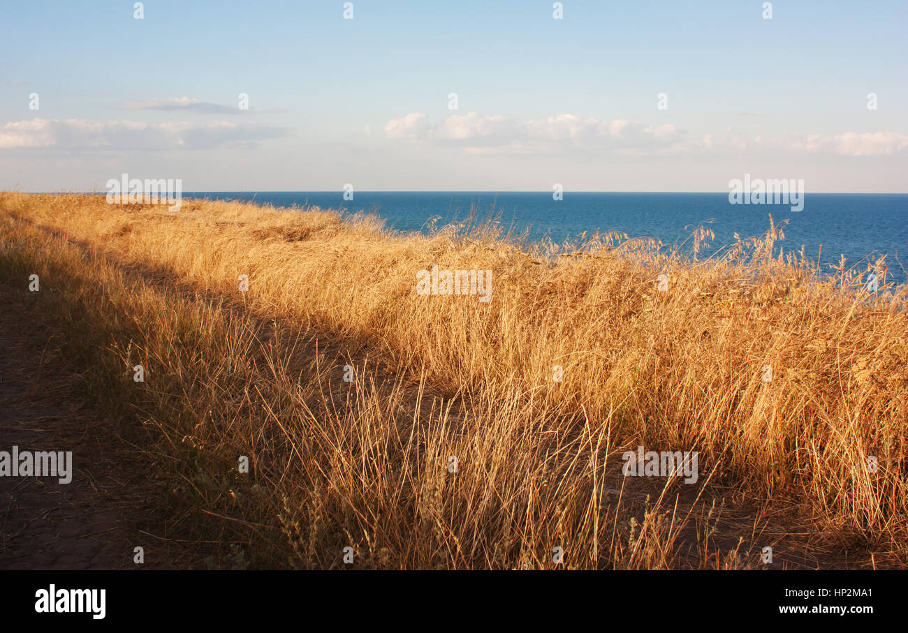 Break above the sea grass on the hill, illuminated by the sun - Stock Image