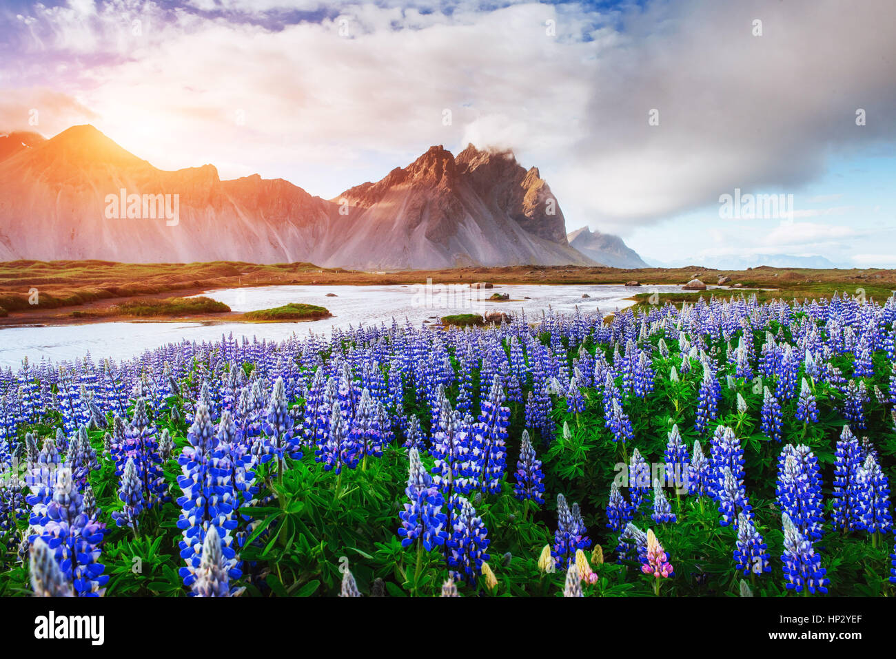 The picturesque landscapes forests and mountains of Iceland Stock Photo