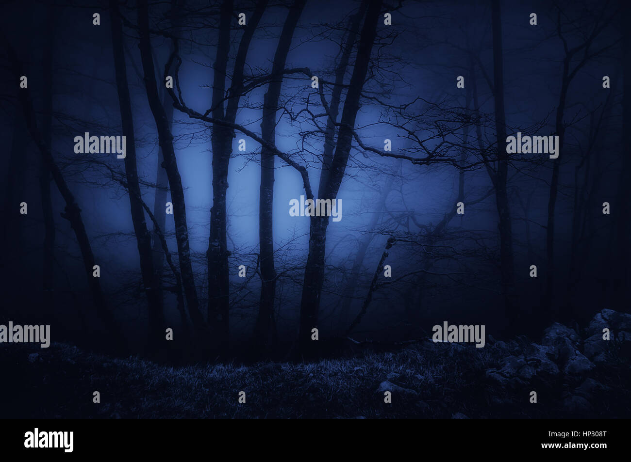 dark and scary forest at the night - Stock Image