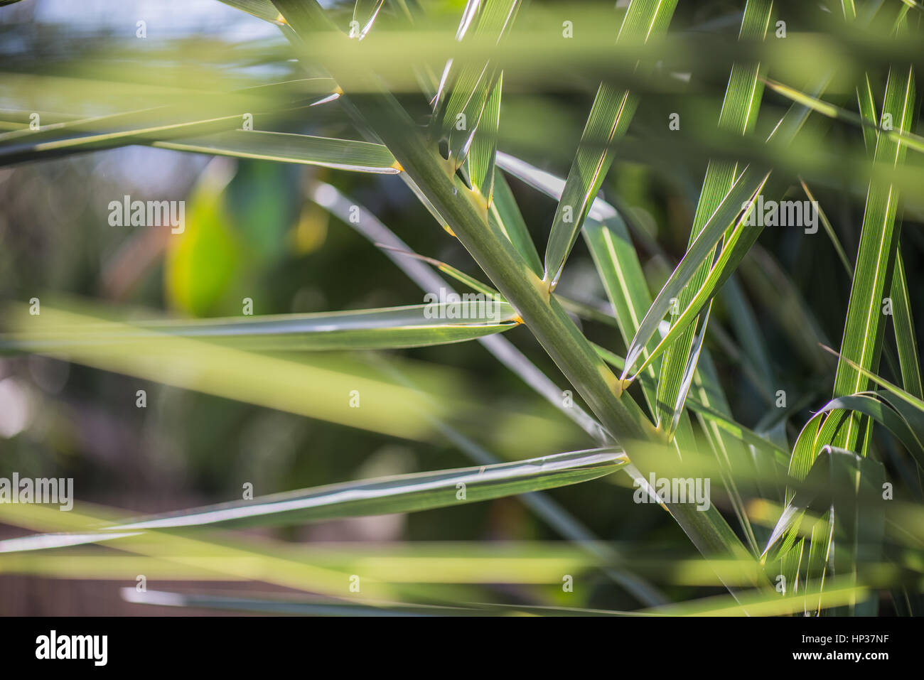 Light and aboundant green leaves with blurred background - Stock Image