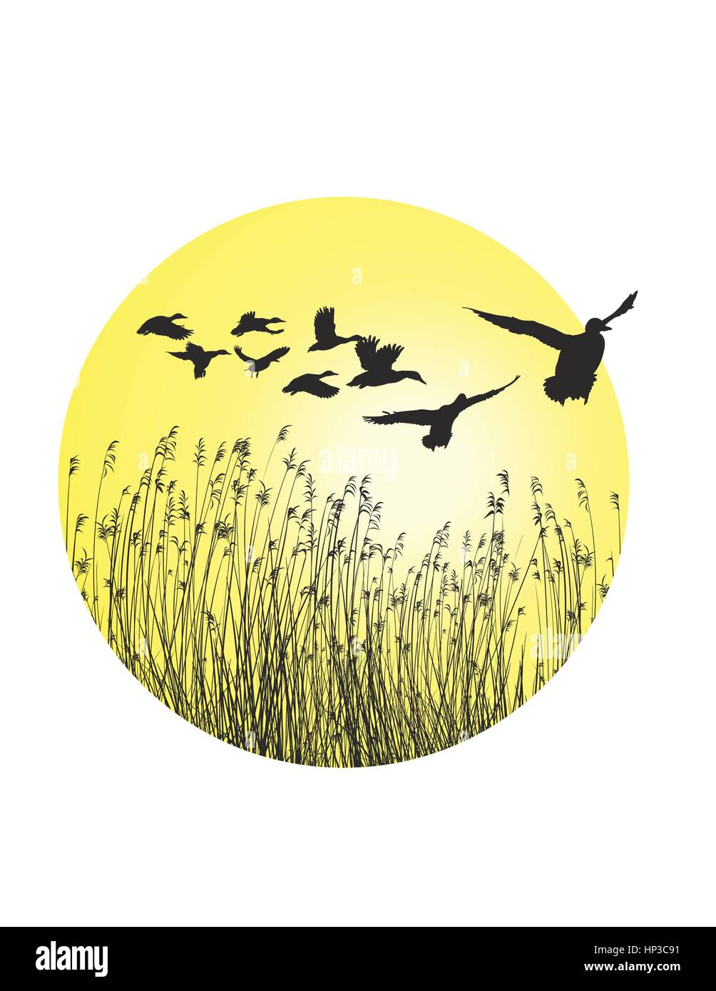 Flying Ducks Cut Out Stock Images & Pictures - Alamy
