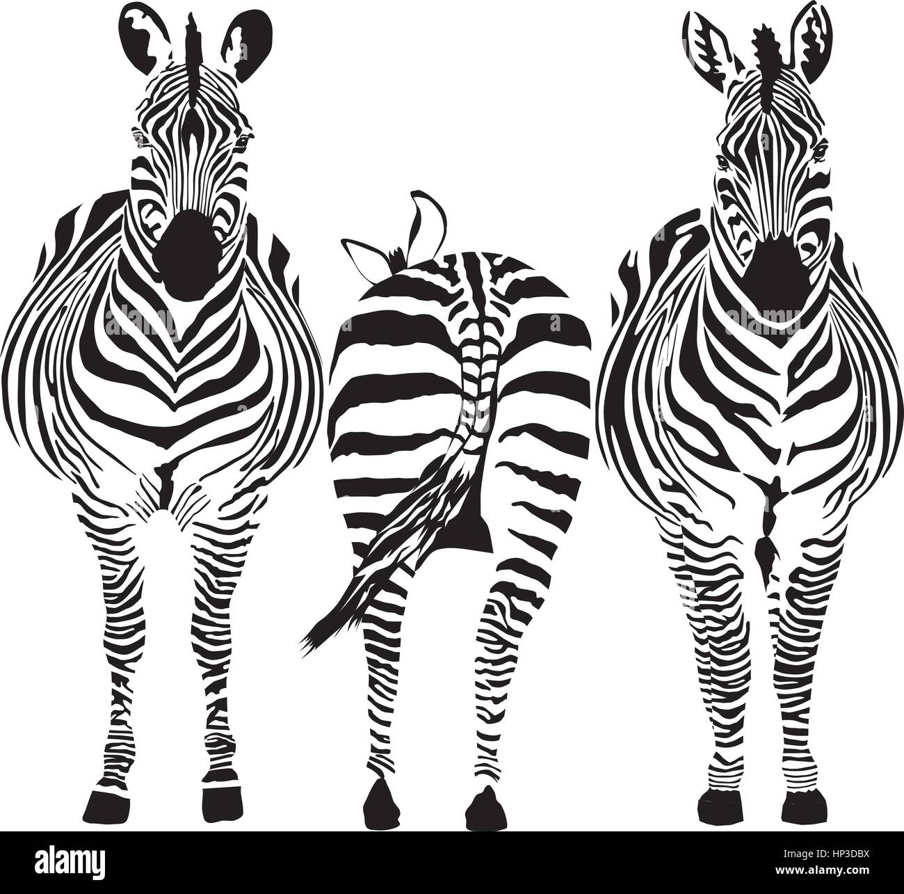 illustration of three zebras, two front, one rear - Stock Vector