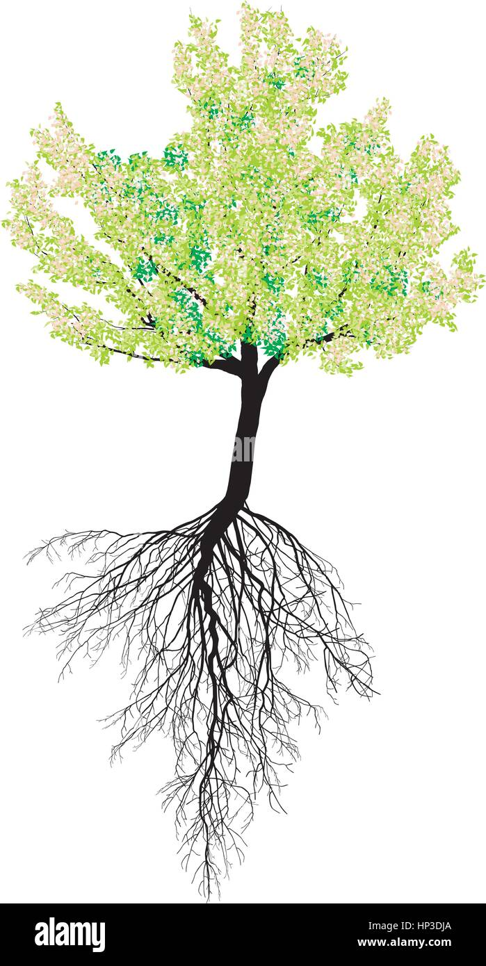 Illustration of flowering cherry with roots in spring - Stock Image
