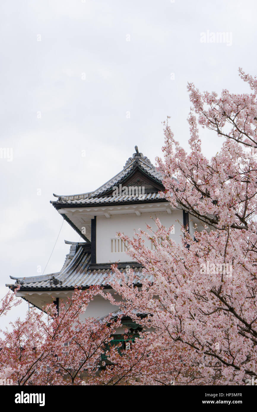 Kanazawa Castle behind fully bloomed sakura flowers, Kanazawa, Japan - Stock Image