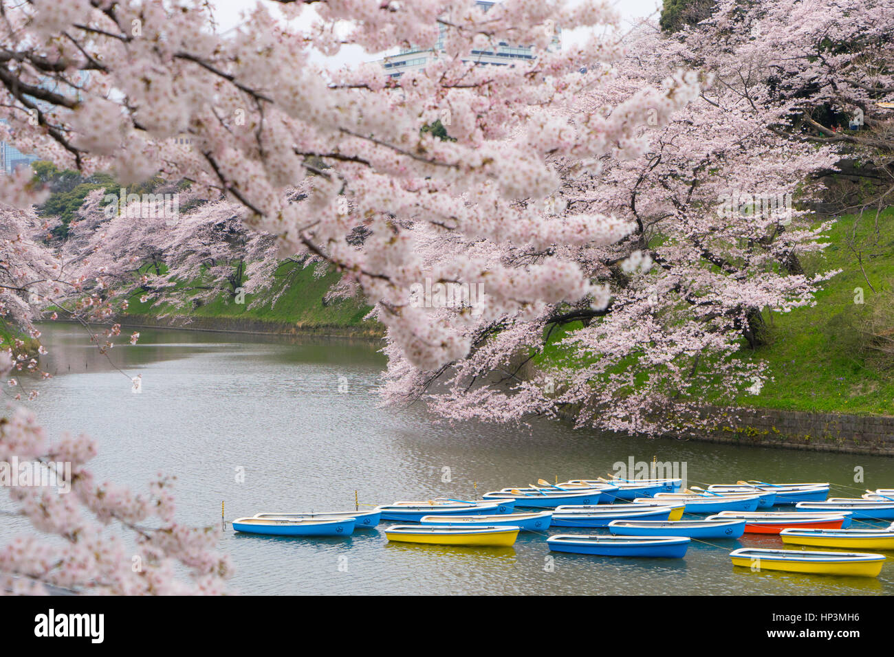 Rowing boats in the Imperial Palace moat in Tokyo, Japan Stock Photo