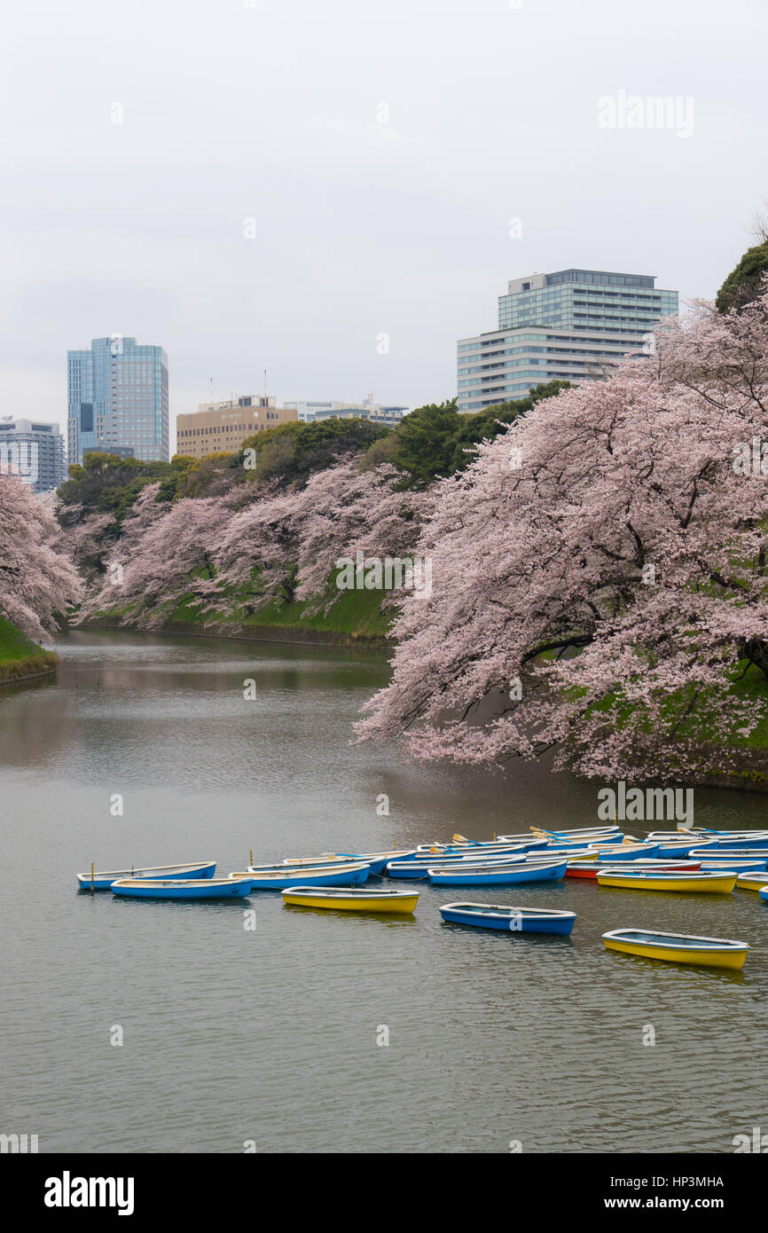 Rowing boats in the Imperial Palace moat in Tokyo, Japan - Stock Image