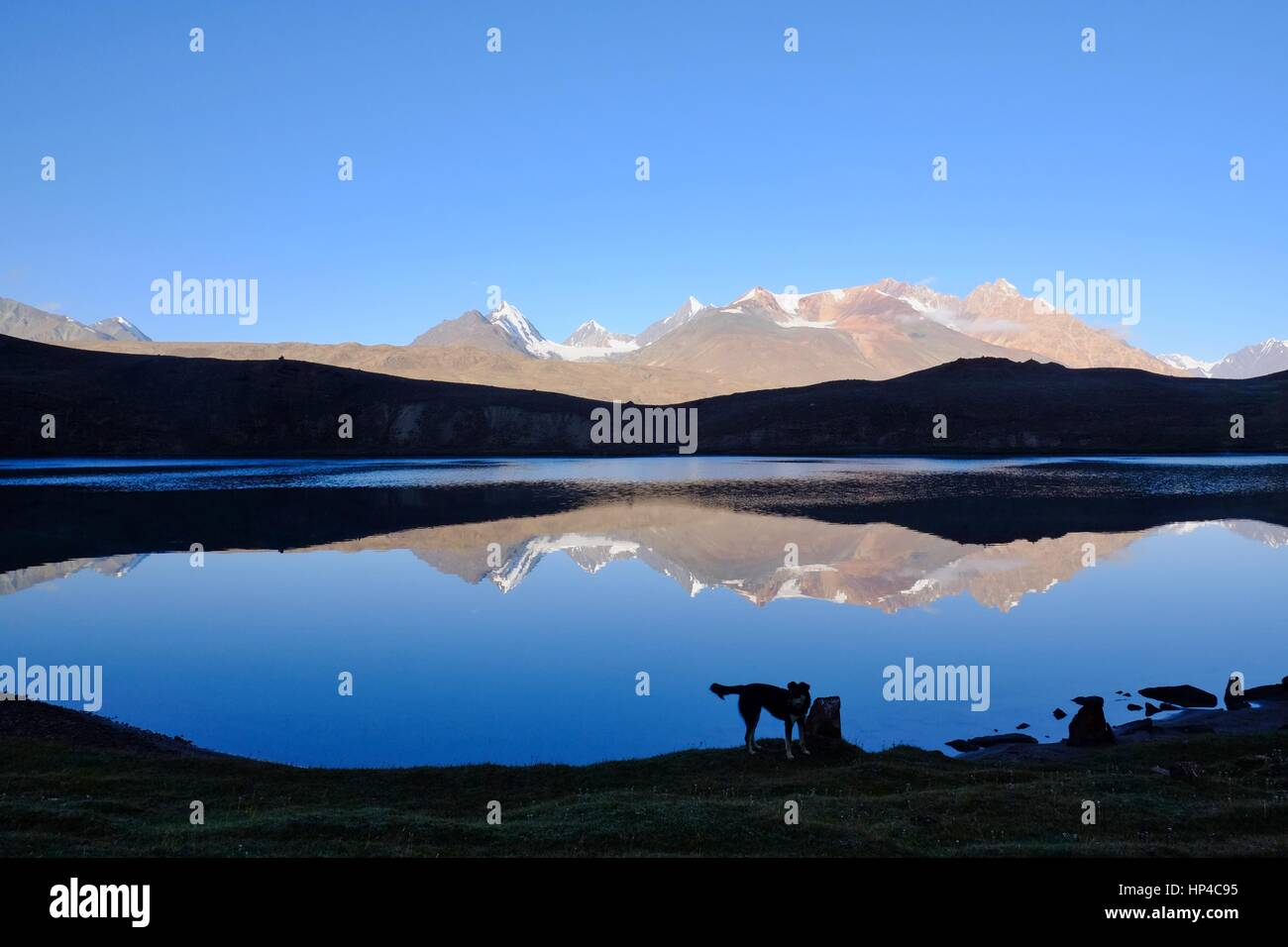 Chandra Taal (Moon Lake) in Indian state Himachalč Pradesh at 4300 m altitude. Dog living there in the wilderness - Stock Image