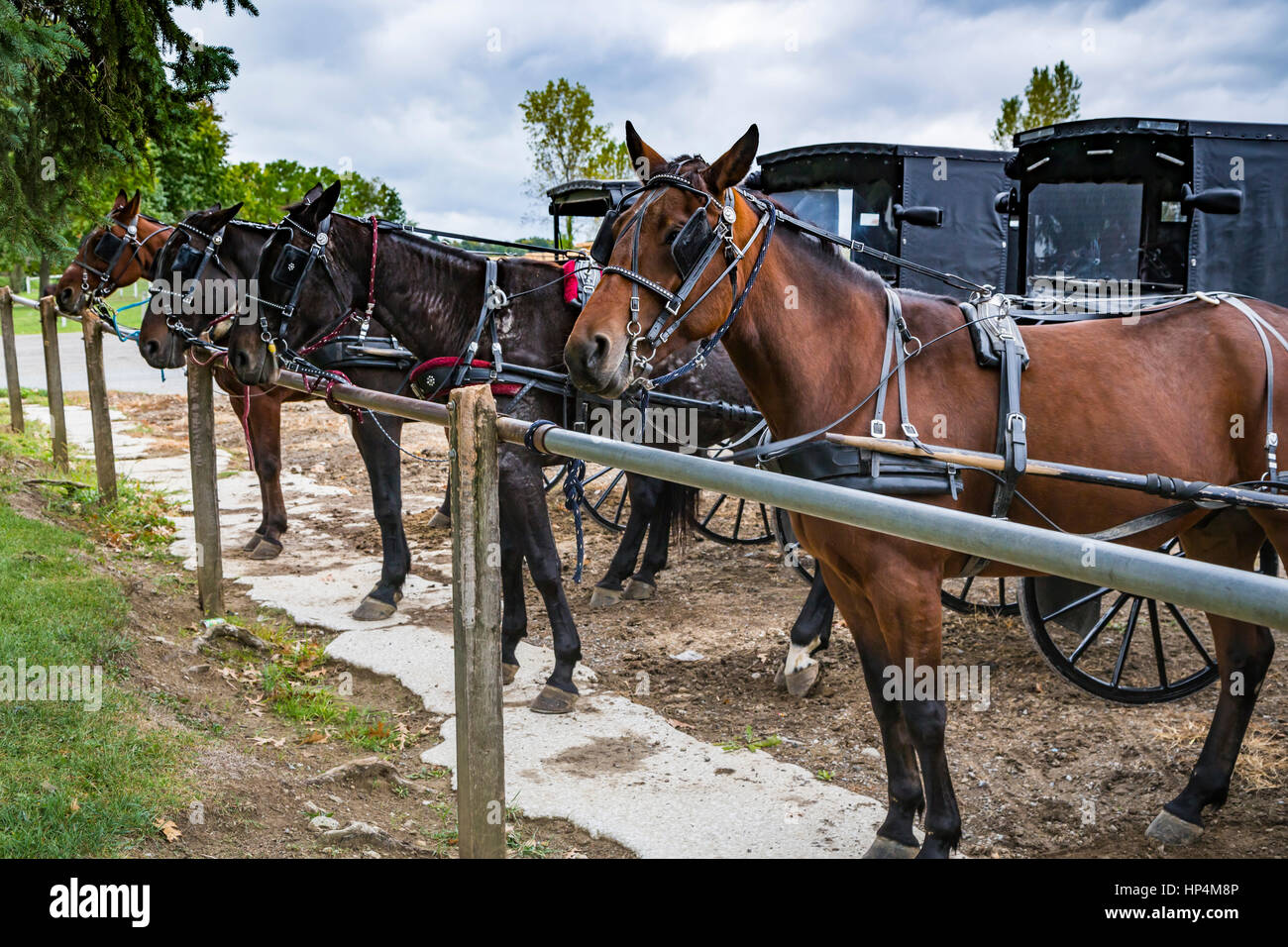 Amish horse and buggies at a hitching post in Dalton, Ohio