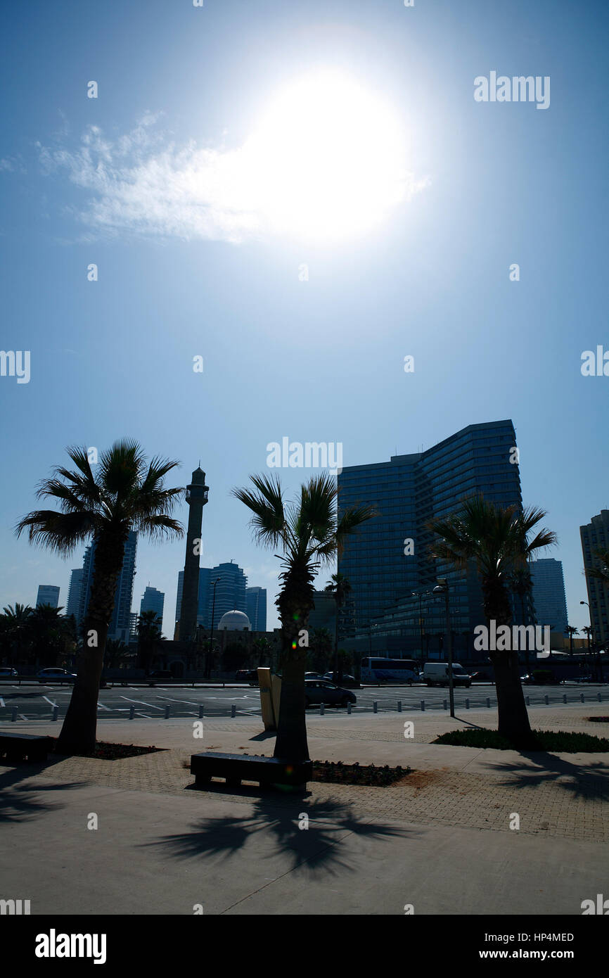 silhouette with backlit andpalm trees and high rise building, tel aviv, israel Stock Photo