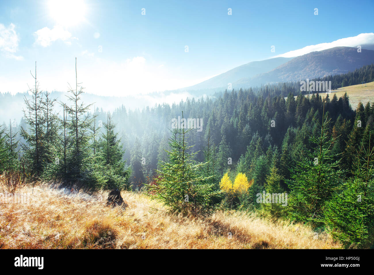 Winter landscape glowing by sunlight. Dramatic scene. Scenic fog - Stock Image