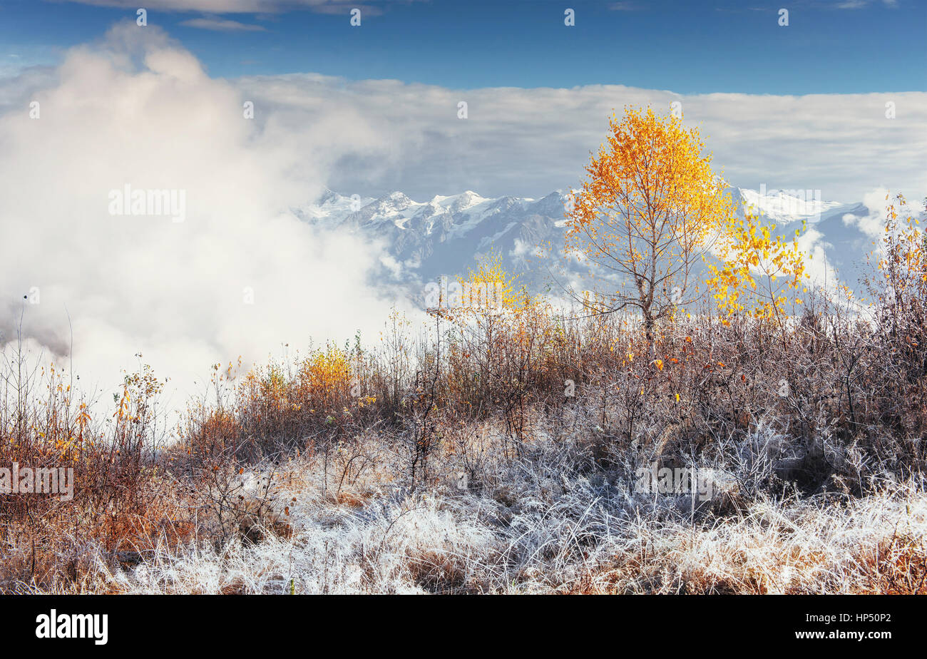 birch forest in sunny afternoon while autumn season. October mou - Stock Image