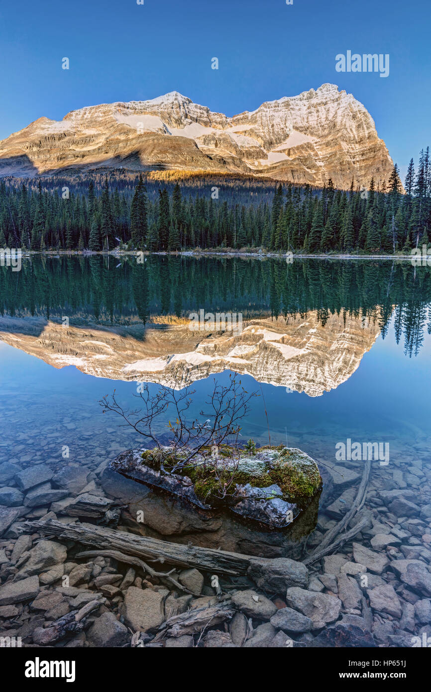 Calm O'Hara lake and reflection at sunrise in the backcountry of the Canadian Rockies , Yoho National Park, British Stock Photo
