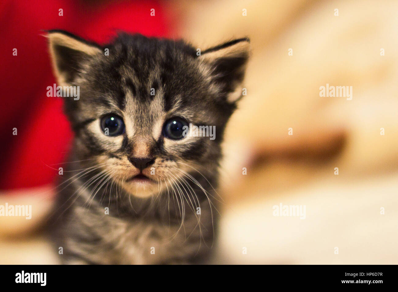 Portrait of a small cute kitty - Stock Image