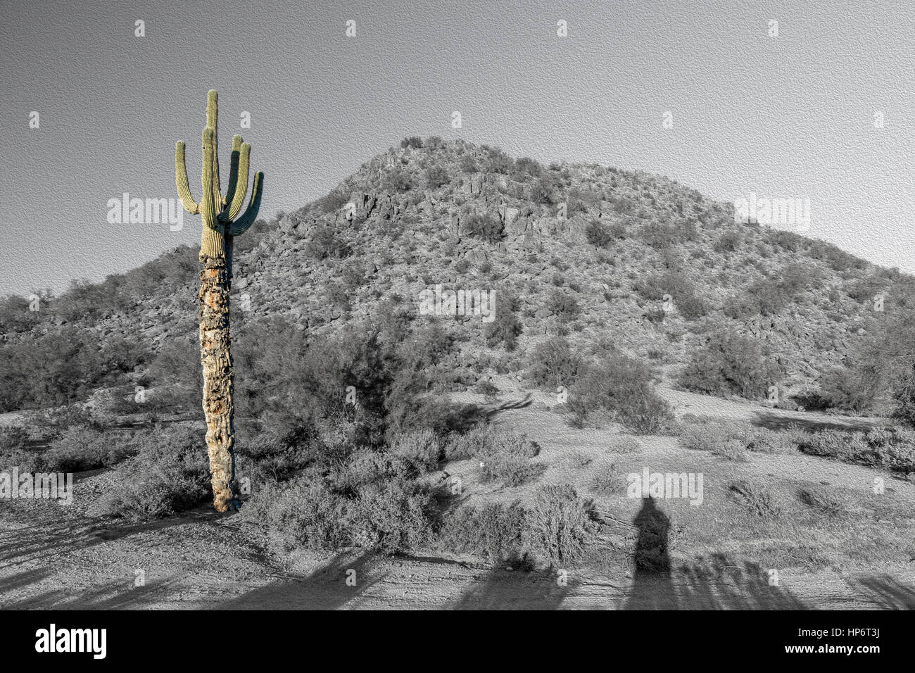 Colored Cactus In Monotone Mountain Scene With Shadows Oil Painting - Stock Image