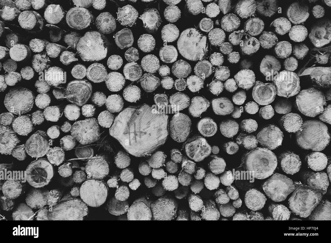 Log pile in black and white - Stock Image