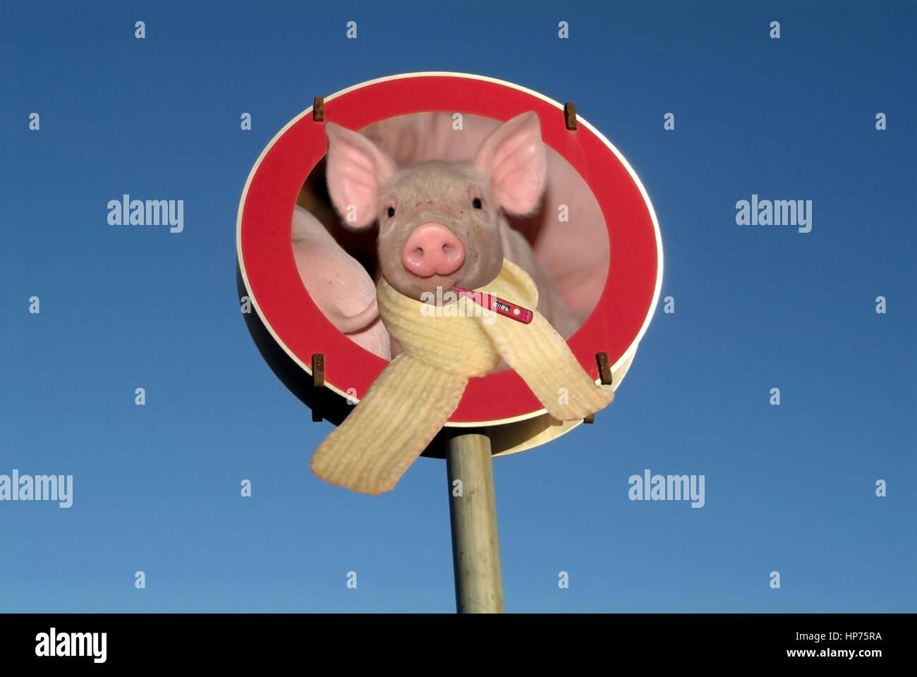 Symbolbild Schweinegrippe - symbolic for swine influenza - Stock Image