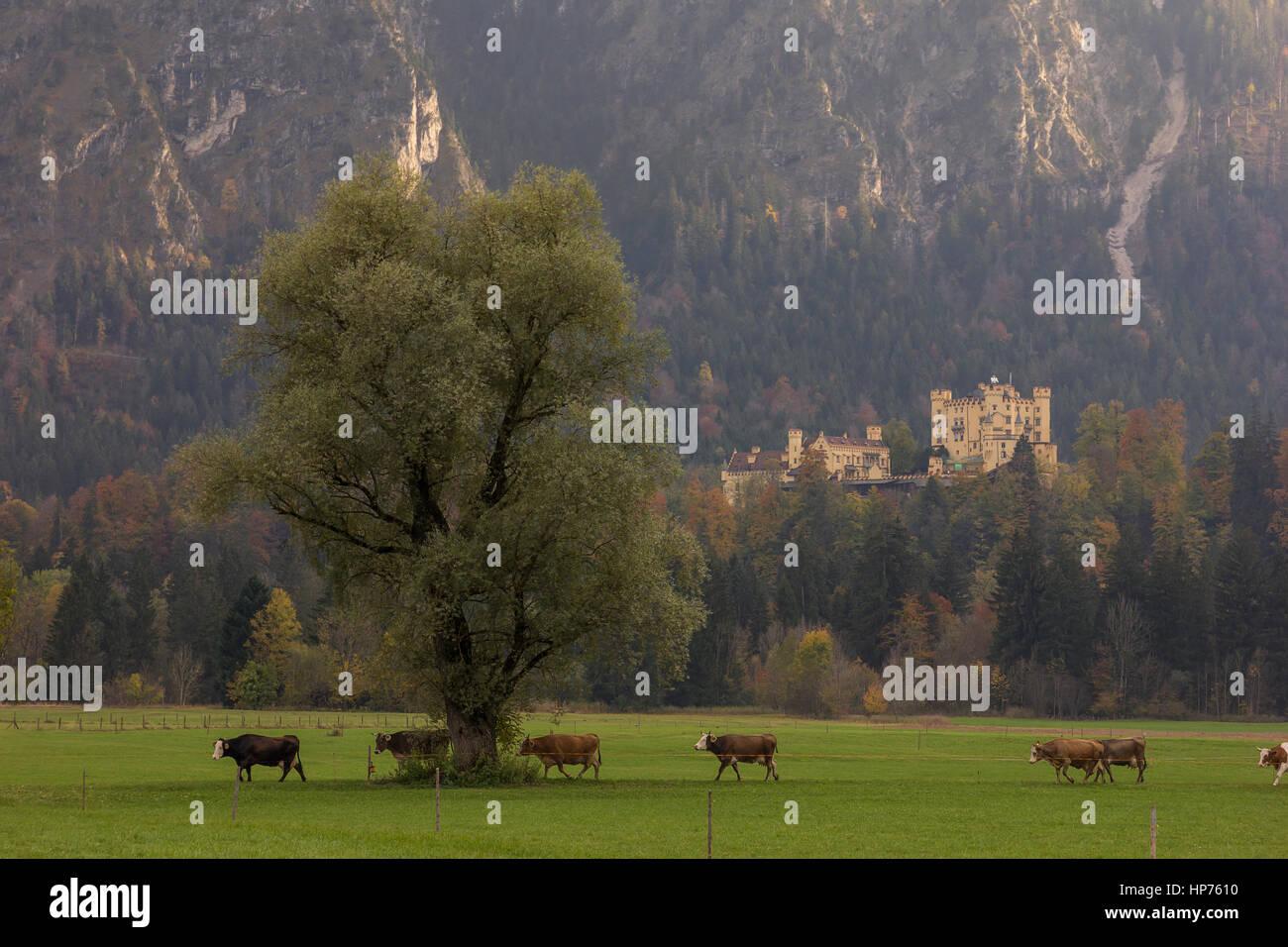 Hohenschwangau Castle - Stock Image