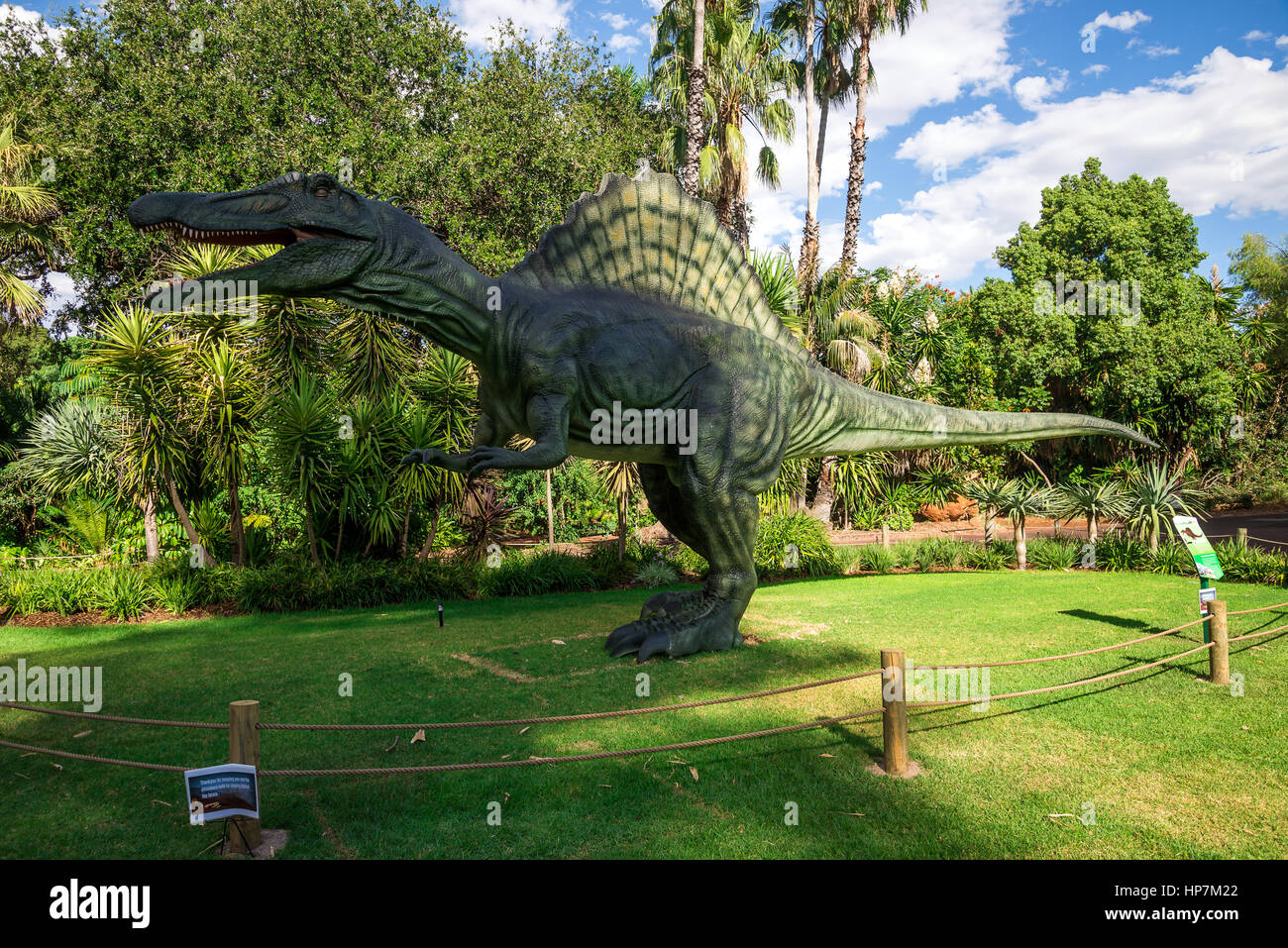 Standing Spinosaurus display model in Perth Zoo as part of Zoorassic exhibition Stock Photo