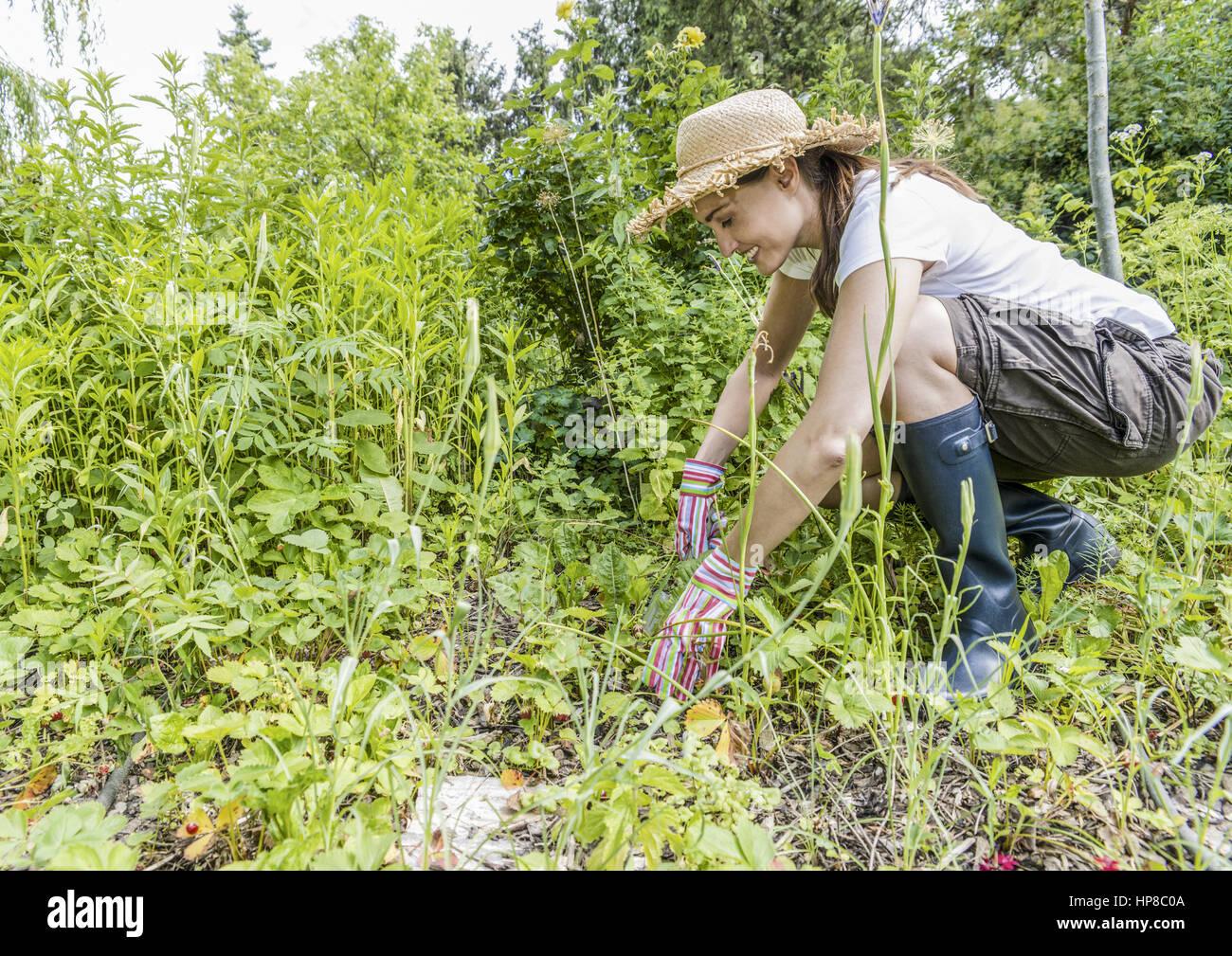 Garten Unkraut Stock Photos Garten Unkraut Stock Images Alamy