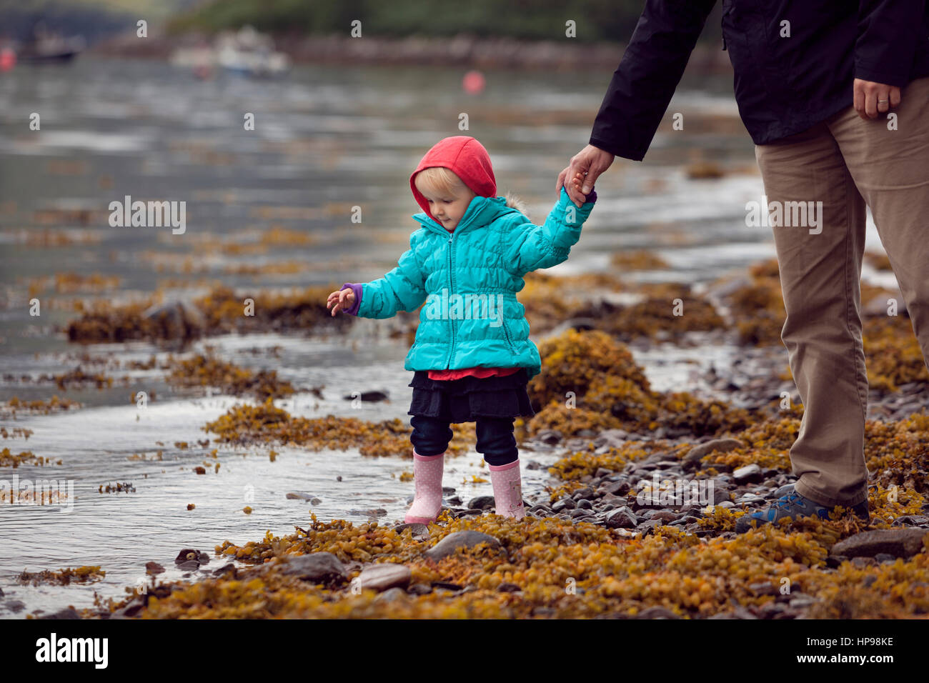Child and father discovering seaweed along the shore of a Scottish loch - Stock Image