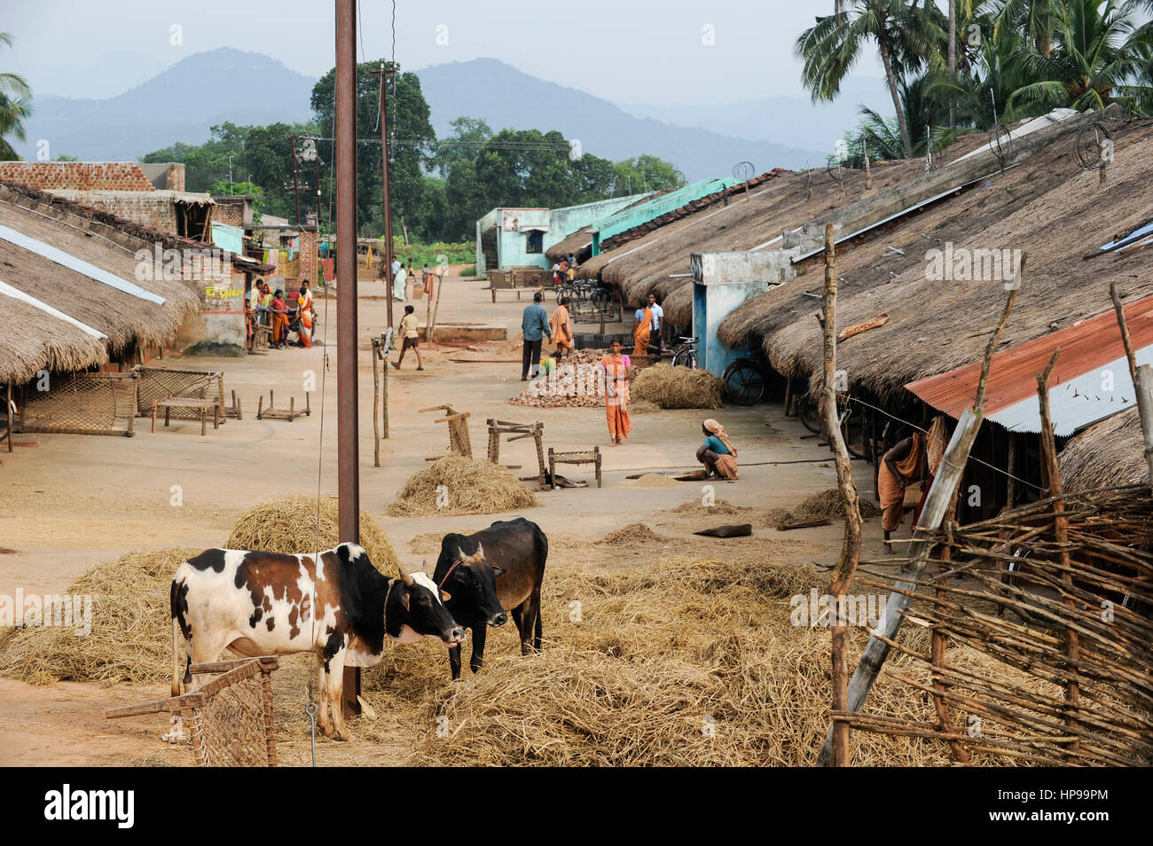 Rural Orissa Stock Photos & Rural Orissa Stock Images - Page 3 - Alamy