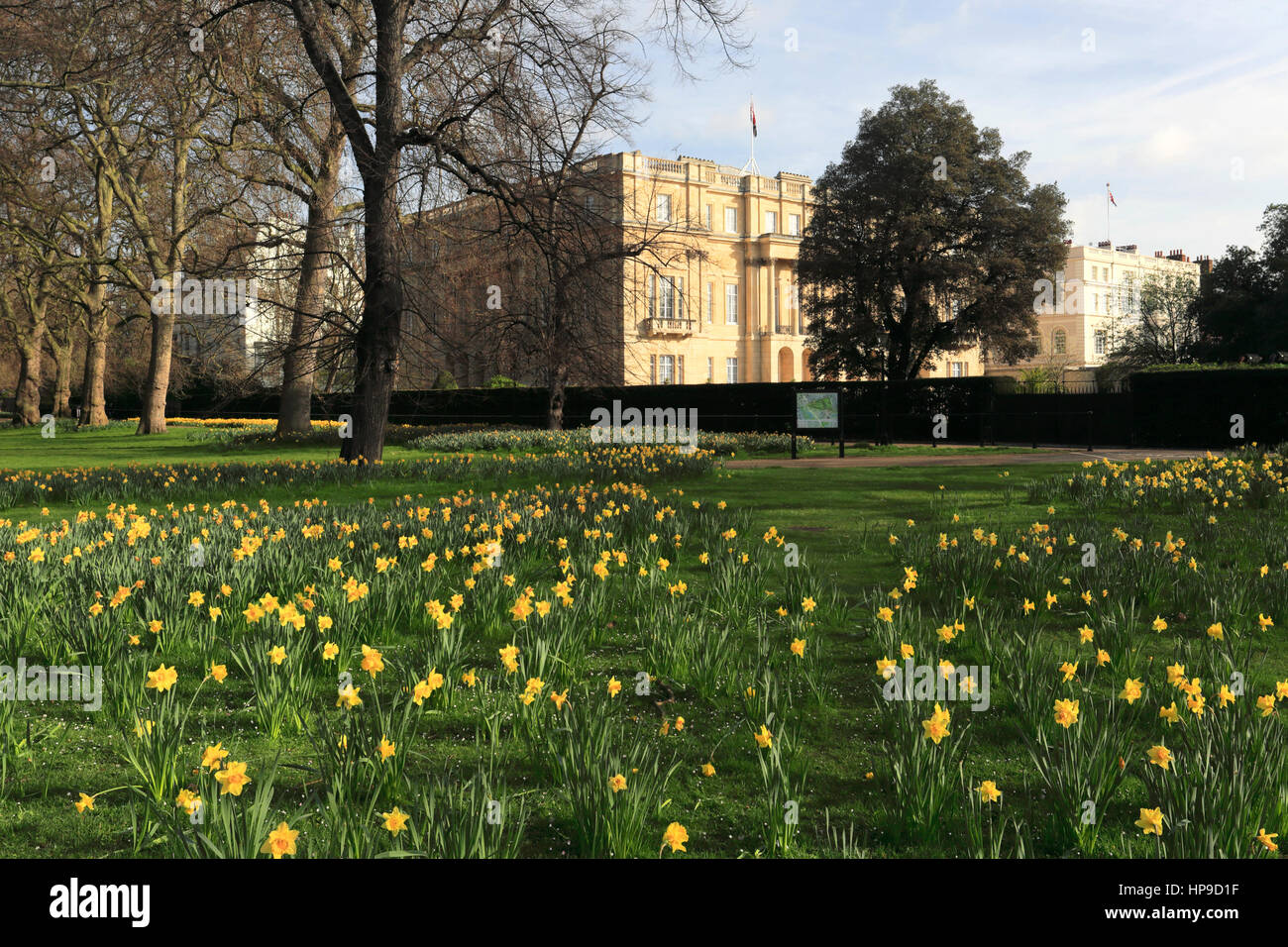 Spring Daffodils, frontage of Lancaster House, Pall Mall, St James, London, England, UK - Stock Image