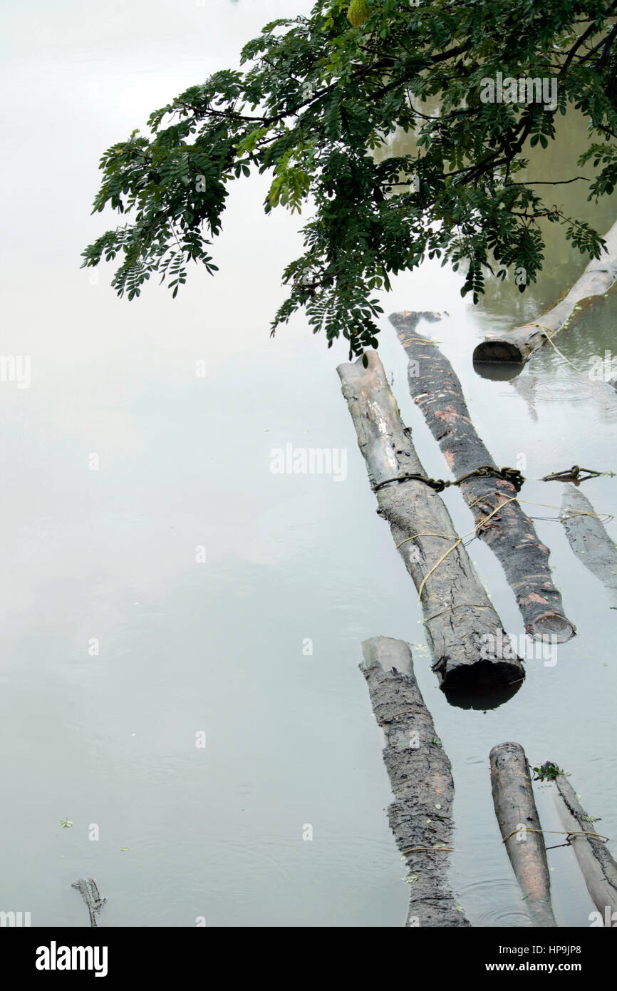 Dead woods - Stock Image
