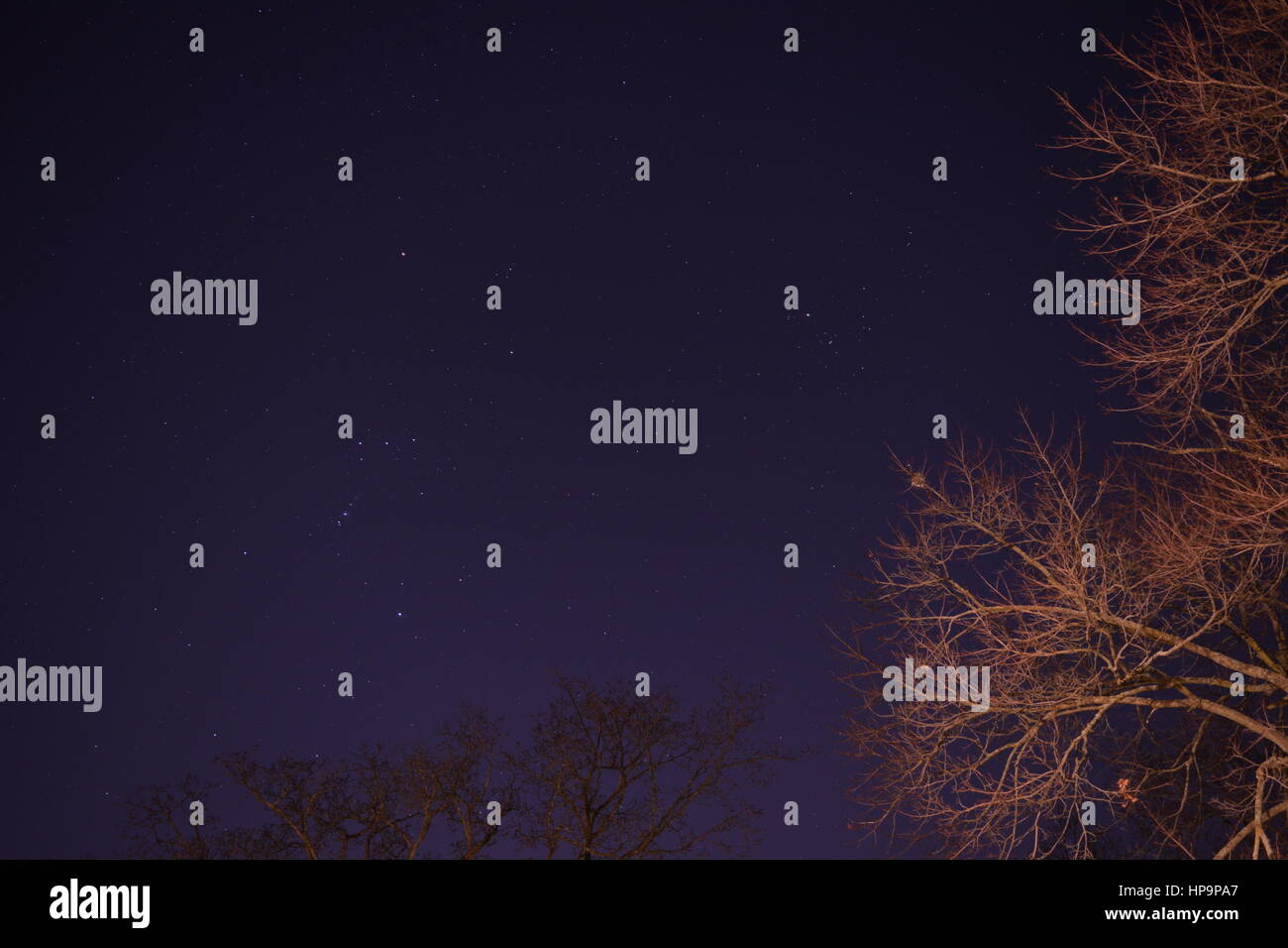 A long exposure of the night sky, with visible stars, and trees in the foreground, and background. - Stock Image