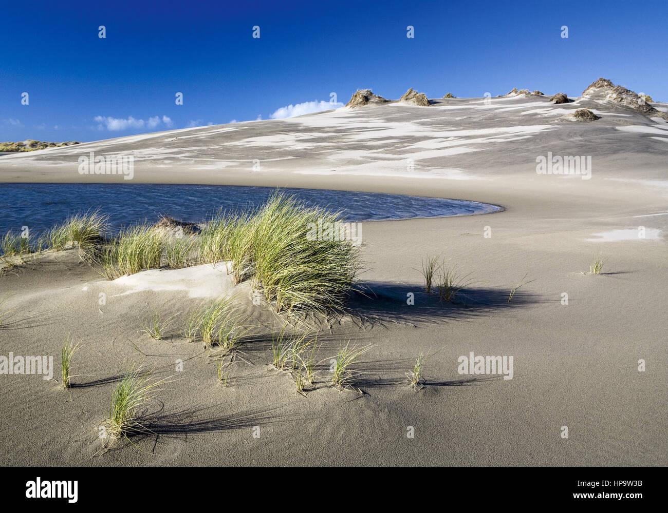 Neuseeland, Suedinsel, Golden Bay, Duenen von Farewell Spit - Stock Image