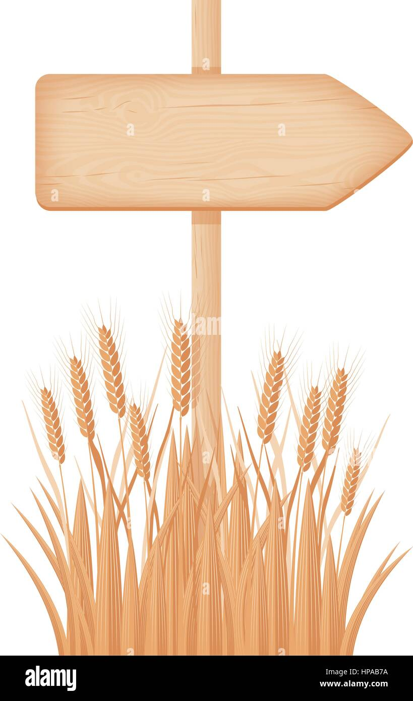 Wooden arrow signboard with knots and cracks on a pole at the wheat field vector illustration - Stock Vector