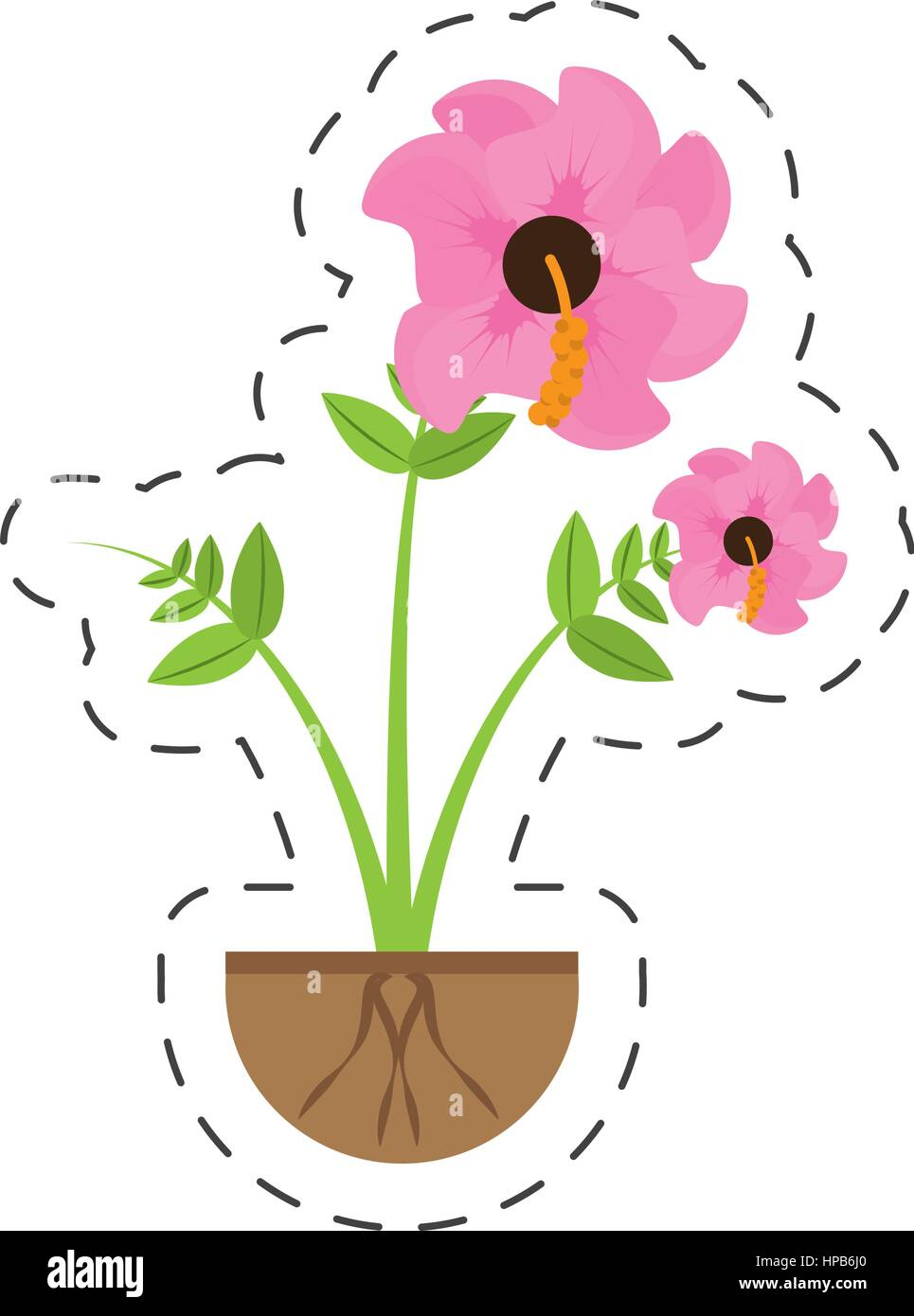 Single Hibiscus Stock Vector Images Alamy