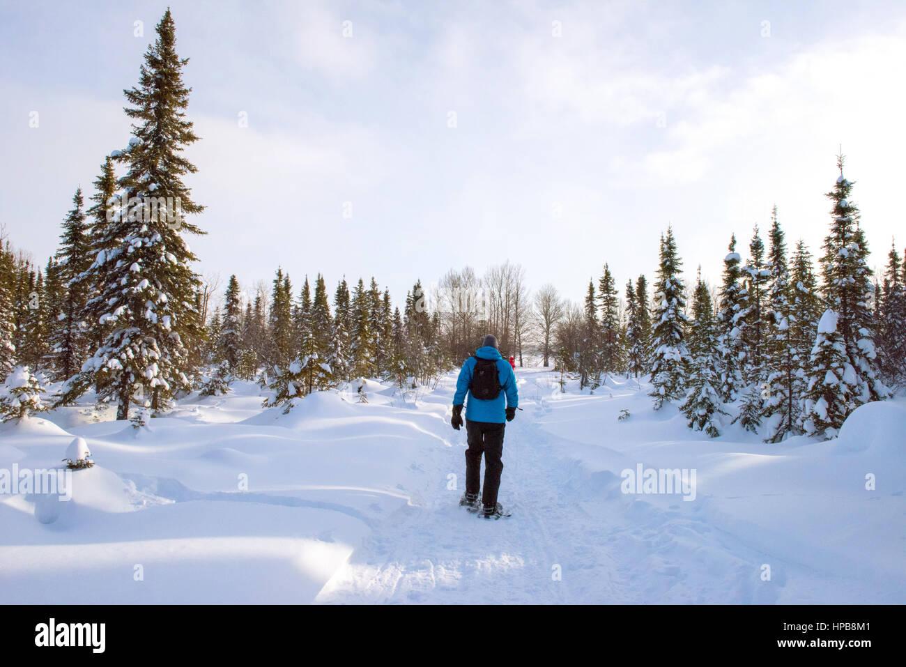 Man snowshoeing Northern Quebec - Stock Image