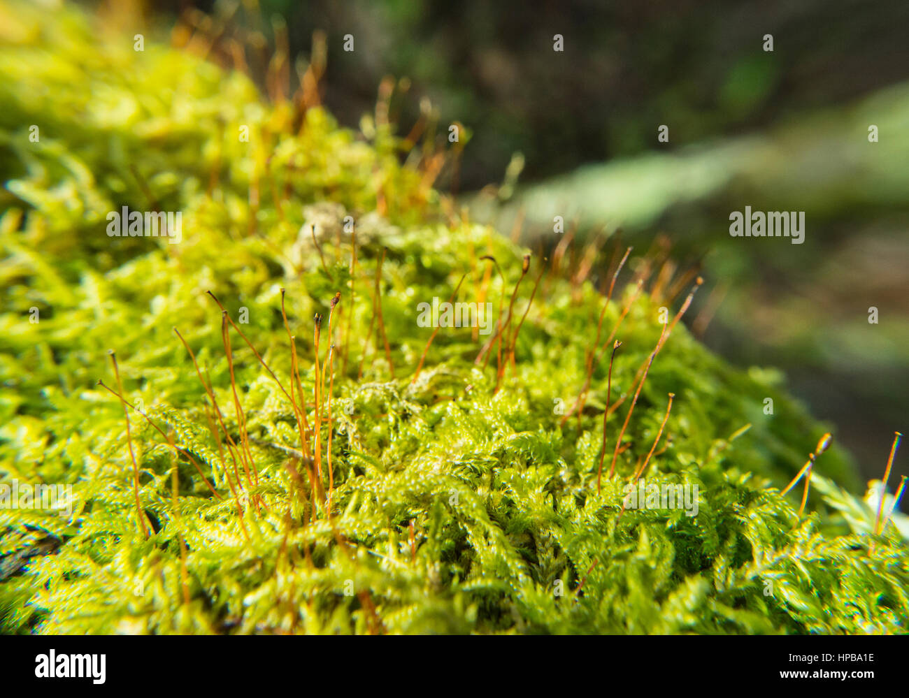 Focus on Moss - Stock Image