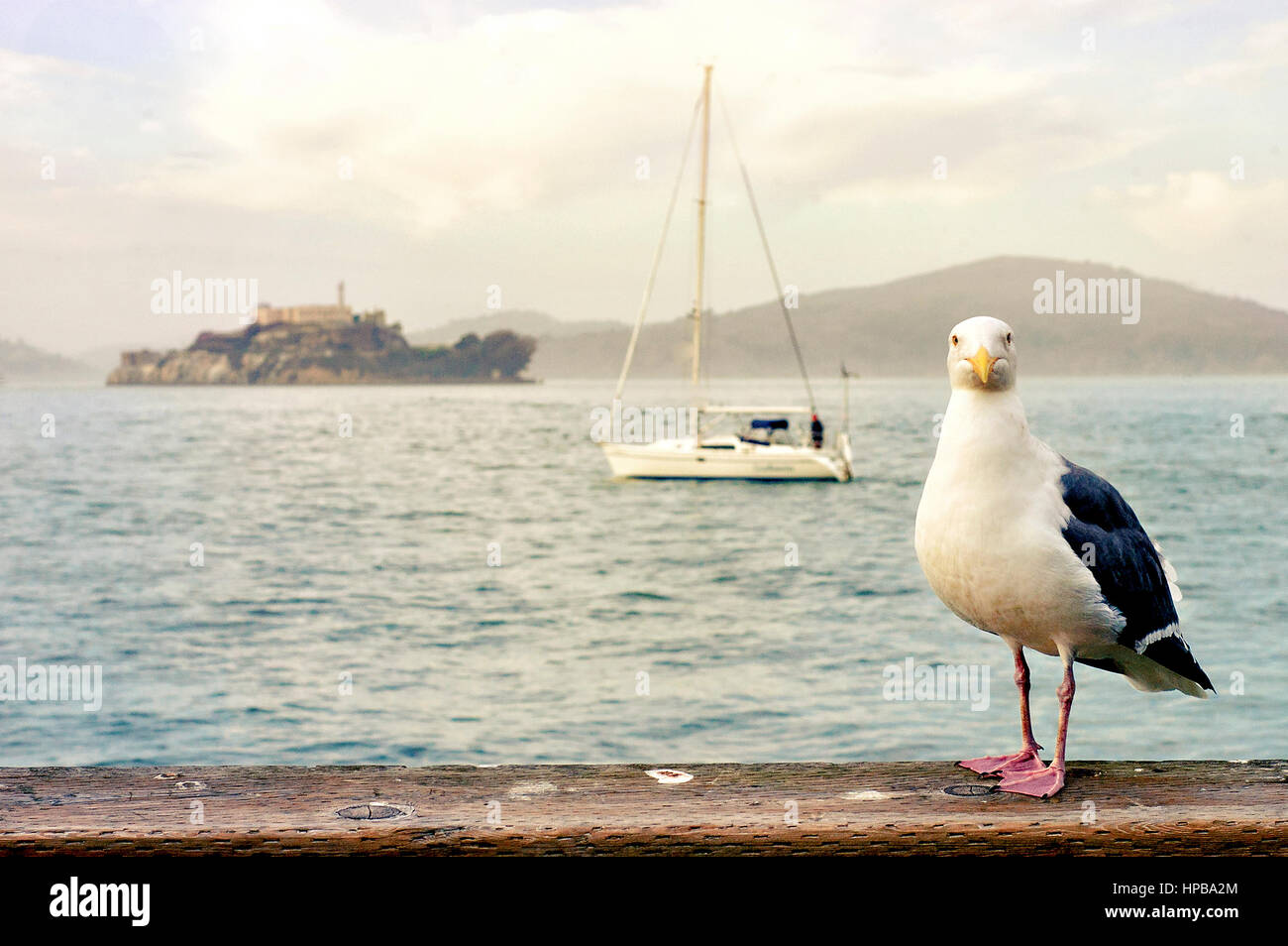 A seagull, sailboat, and a view of Alcatraz Island. - Stock Image