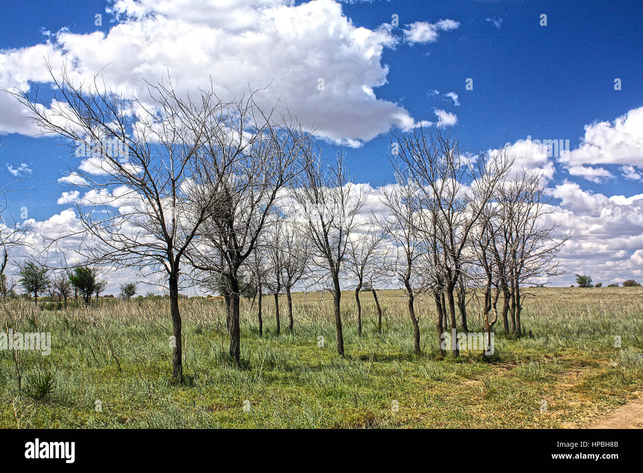 Deadwood in the Steppe - Stock Image