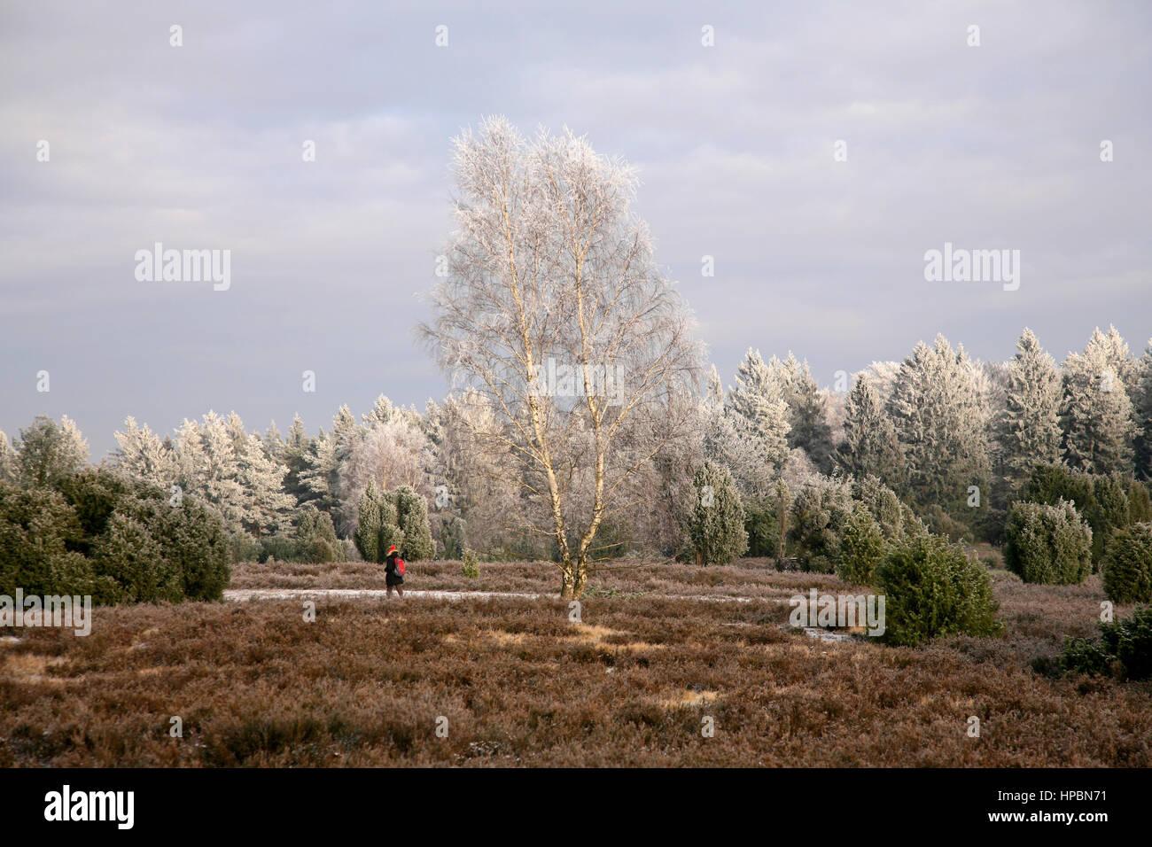 Steingrund, Lüneburger Heide im Winter, Niedersachsen, Deutschland - Stock Image