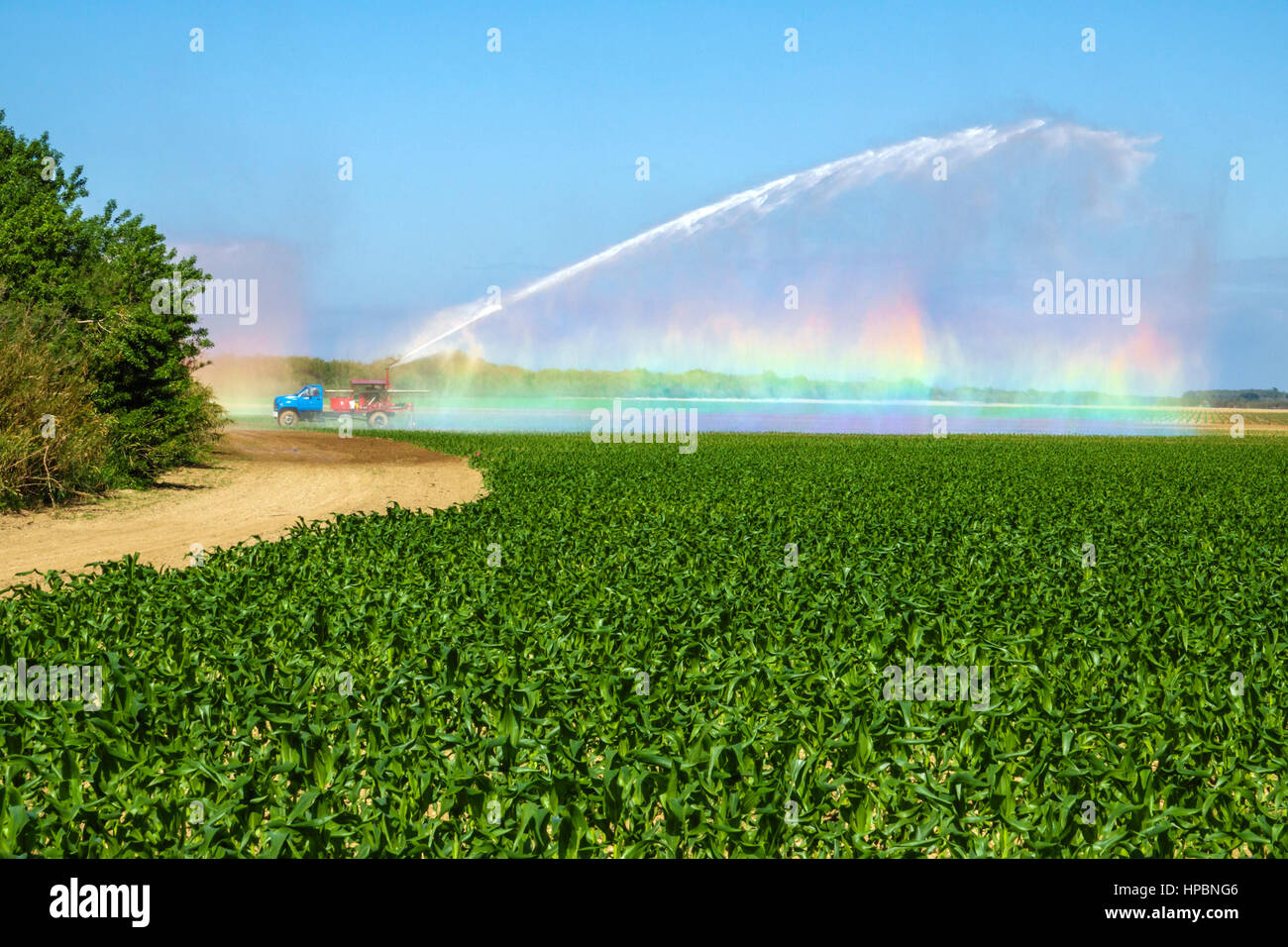 Homestead Florida Redland agriculture field irrigation system watering corn crop rainbow - Stock Image