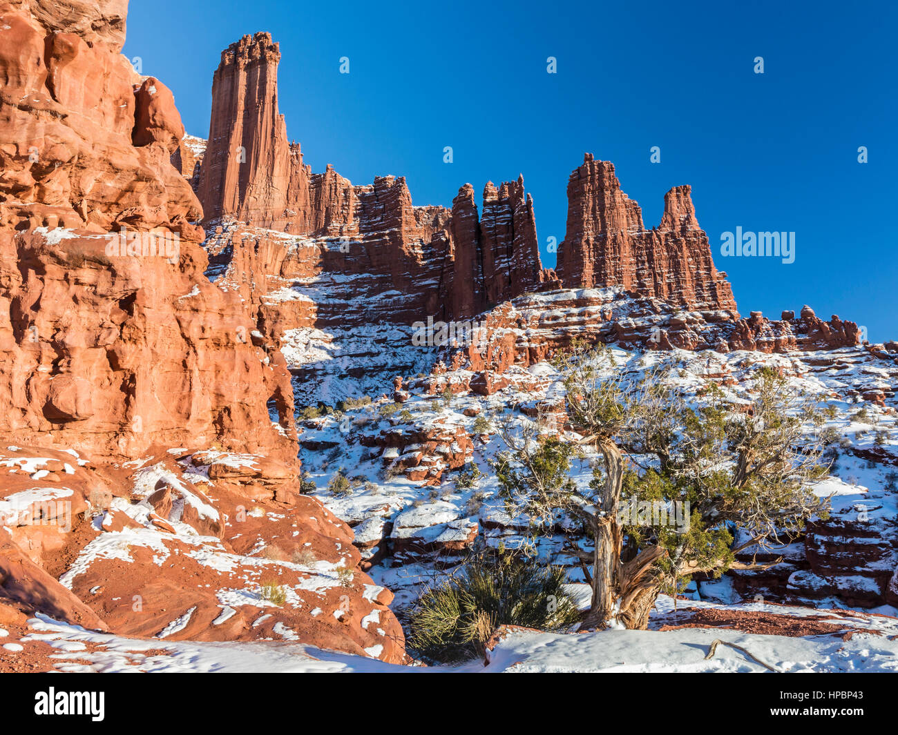 A juniper tree amid the Fisher Towers rock formations near Moab, Utah - Stock Image