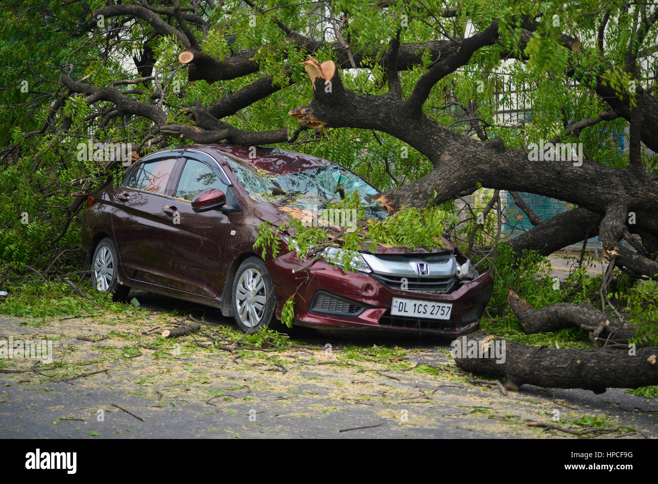 Car destroyed by a fallen tree Stock Photo