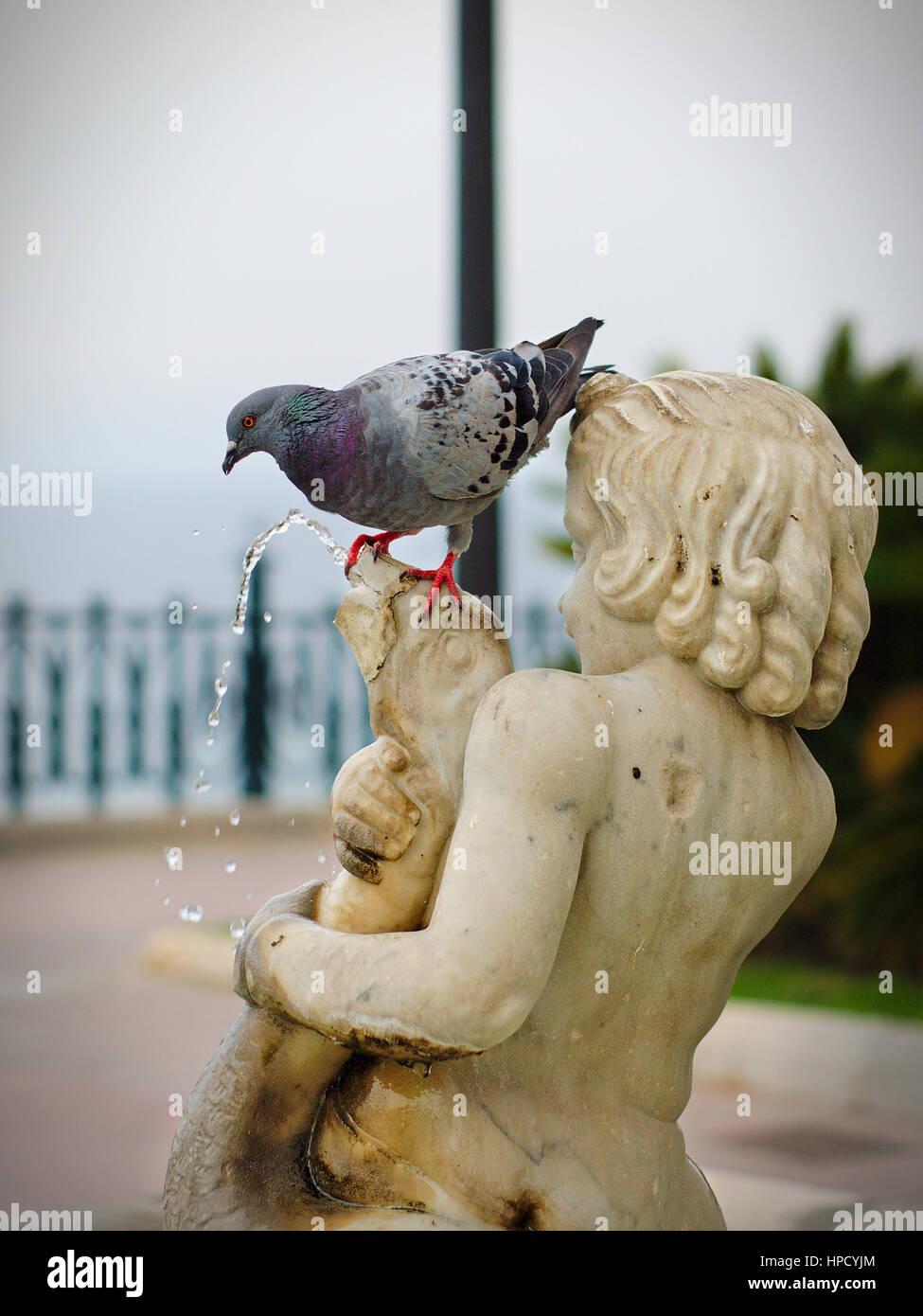 Pigeon drinks water from the fountain of child with goose on the balcony of mediterraneo - Stock Image