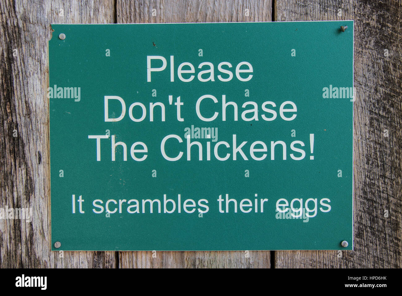 Please Don't Chase the Chickens sign - Stock Image