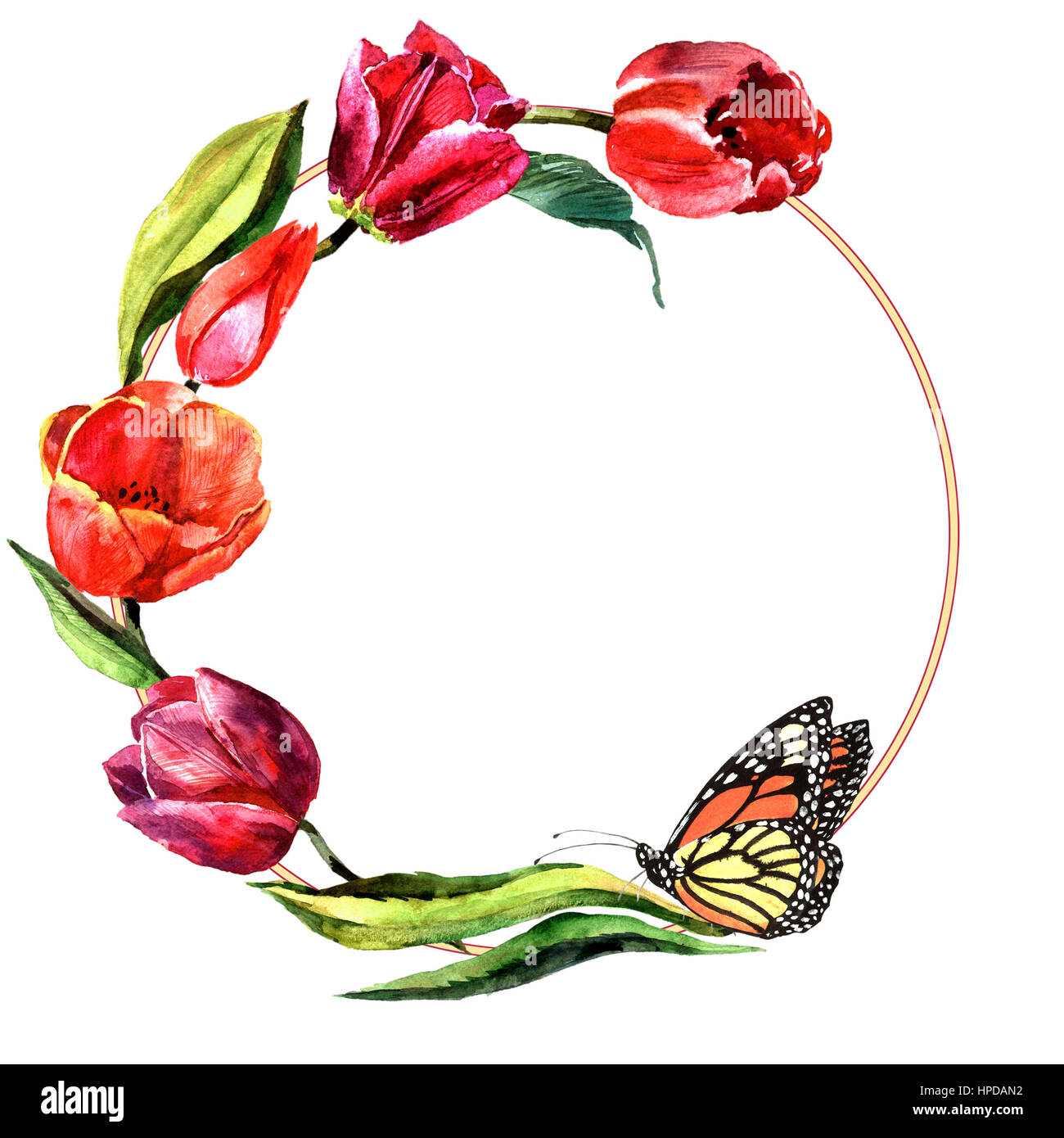 Wildflower Tulip Flower Frame In A Watercolor Style Isolated Full