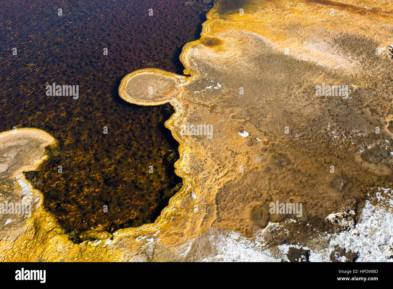 Close detail of a microbial algal mat growing in a hot spring at Yellowstone National Park in Wyoming. - Stock Image