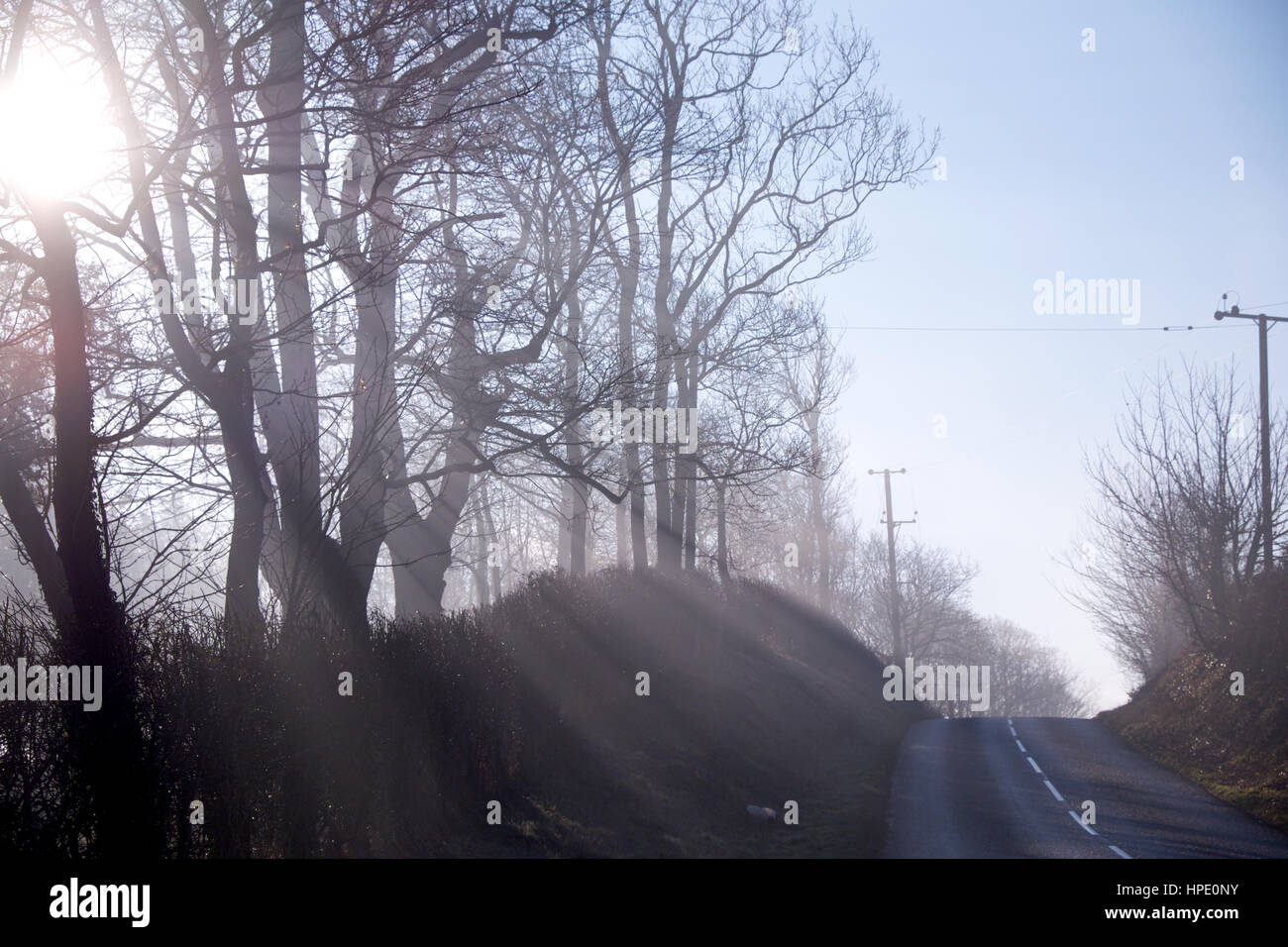 rays of low winter sunlight streaming through trees, shafts of white light, silhoutted trees, hedge and part of Stock Photo