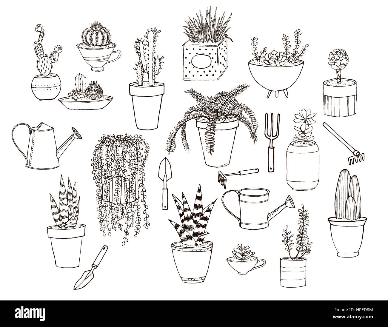 Potted Plants Cut Out Stock Images & Pictures - Alamy