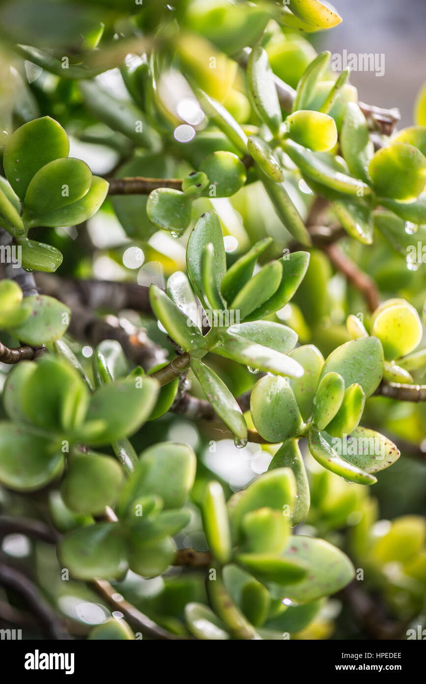 Green spanish succulents in February sun in macro perspective Stock Photo