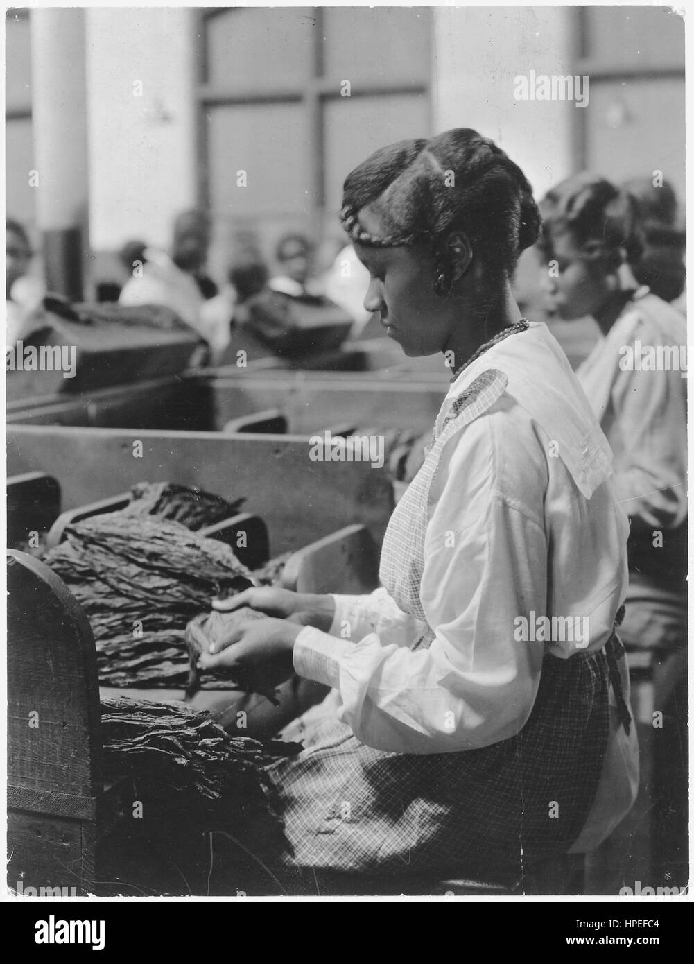 Photograph of a woman working at tobacco plant with tobacco leaves on the table in front of her, January 19, 1922. - Stock Image
