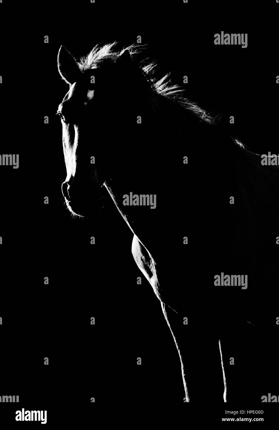 Wild Horse Silhouette In Black And White Stock Photo Alamy