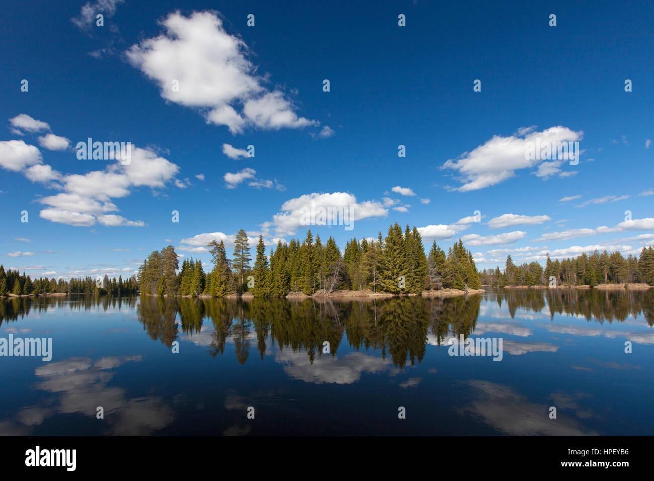 Reflection of spruce trees in water of the Västerdal River / Västerdalälven / Vaesterdalaelven, Dalarna, Sweden, Stock Photo